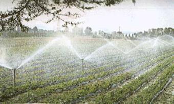 Siccità, la Regione Campania in soccorso di agricoltori e allevatori