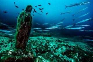 "Punta Campanella si conferma area marina ""Speciale"""