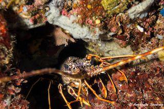 Aumenta la biodiversità, il mare di Punta Campanella è ok