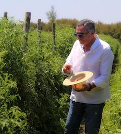 Al via da Sorrento il progetto gastronomico Basilico Italia