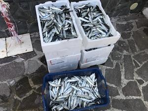 Pesca in zona protetta, sanzioni da 4mila euro e sequestri