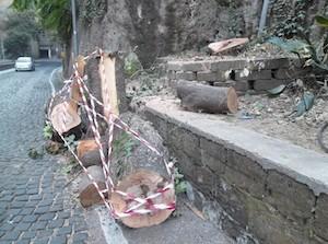 """Allarme del Wwf: """"A Sorrento 93 alberi a rischio abbattimento"""""""