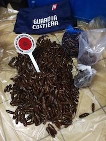 Nuovo blitz della Guardia Costiera, sequestrati 30 kg di datteri
