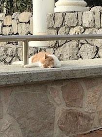 gatti-morti-marina-del-cantone-1