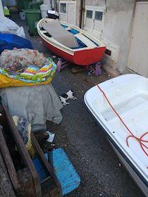 Strage di gatti a Marina del Cantone – foto –