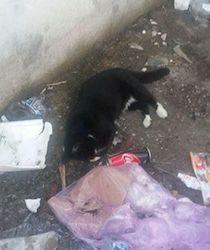 gatti-morti-marina-del-cantone-5