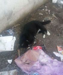 "Strage di gatti a Marina del Cantone, Cacace: ""Crudeltà estrema"""