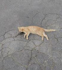 gatti-morti-marina-del-cantone