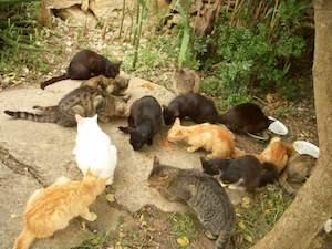 Strage di gatti a Sorrento, mancano all'appello altri 10 felini