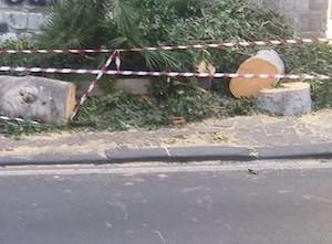 Alberi tagliati sul corso Italia di Sorrento, acquisiti gli atti