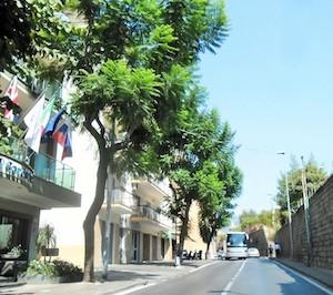 alberi-corso-italia-56