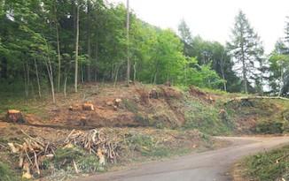 Varato il Testo Unico Forestale, affondo del Wwf