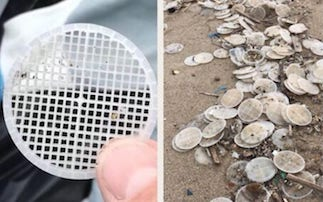"""Dischetti di plastica sulle spiagge. Il Parco di Punta Campanella: """"Segnalate gli avvistamenti"""""""