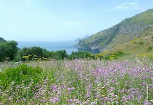 Visita guidata al patrimonio floreale della Baia di Ieranto