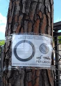 alberi-da-tagliare-sorrento-2