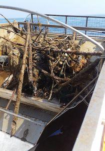 Quintali di rifiuti rimossi dal mare e dalla costa di Sorrento – foto e video –