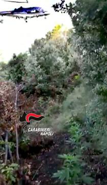 """Sul Faito scoperta piantagione di marijuana """"monofilare"""" – video –"""