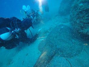 Rana pescatrice gigante avvistata nel Parco di Punta Campanella – video –