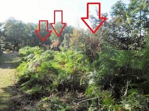 Morti gli alberi del Faito piantati in ricordo di Angelo Vassallo