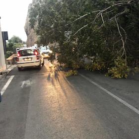 Cade albero sulla statale Sorrentina, disagi per la circolazione
