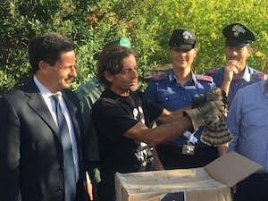 Sparviero ferito da bracconieri rimesso in libertà a Sant'Agnello