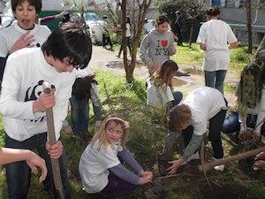 Invito del Wwf: Piantiamo alberi nelle città