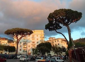 Rischio motoseghe per il pino di piazza Mercato