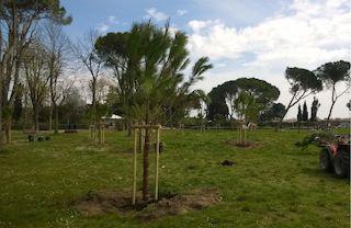 Nuovi alberi per il parco giochi di Massa Lubrense