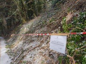 Taglio alberi al Faito, denunciato il committente