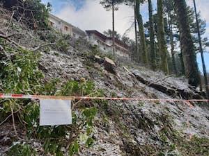Alberi secolari tagliati sul Faito, sequestrata l'area