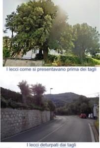 alberi-tagliati-villa-sabrina-1