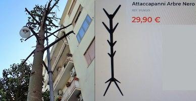 Il Wwf: A Sorrento albero potato come attaccapanni Ikea