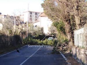 albero-caduto-nastro-verde-23219
