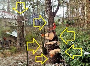 Ancora alberi abbattuti sul Faito, il Wwf chiede gli atti