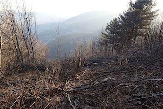 Nuovo taglio non autorizzato di alberi sul Faito