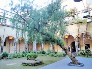 Ricostruzione del Wwf: Ecco come hanno deciso di eliminare l'albero del chiostro di San Francesco di Sorrento