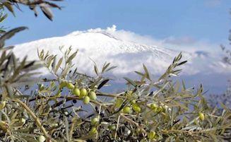 Il Premio Sirena d'Oro di Sorrento sbarca in Sicilia