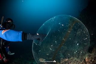 Svelato il mistero della sfera gelatinosa di Punta Campanella