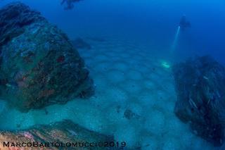 Spettacolare avvistamento nel mare di Punta Campanella – foto –