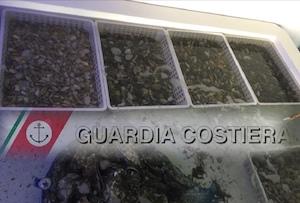 Prodotti ittici non tracciati e vongole pericolose, blitz Capitaneria