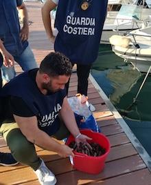 Pescatori di frodo di datteri in trasferta, denunciati