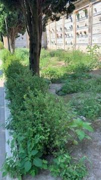 Cimitero di Sorrento nel degrado, la rabbia dei cittadini – foto –