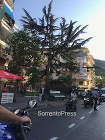 A Sorrento cade il ramo di un pino in via degli Aranci – foto –
