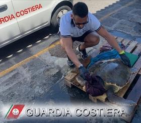 Tartaruga uccisa da una barca tra Capri e Punta Campanella – foto –