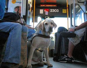 Nuovo regolamento per il trasporto degli animali su treni, bus e funivia Eav