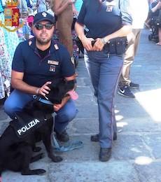 Polizia di Sorrento con il cane Nora arresta pusher di Massa Lubrense – foto –
