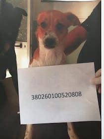 Vicenda cani di Sant'Agnello, multe per i manifestanti mentre gli animali sono ancora nel canile