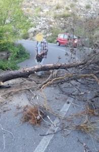 crollo-alberi-faito