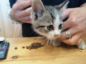 Gattino cade in un dirupo a Sorrento, salvato dai vigili