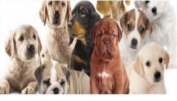 A Castellammare giornata del microchip gratuito e benedizione dei cani